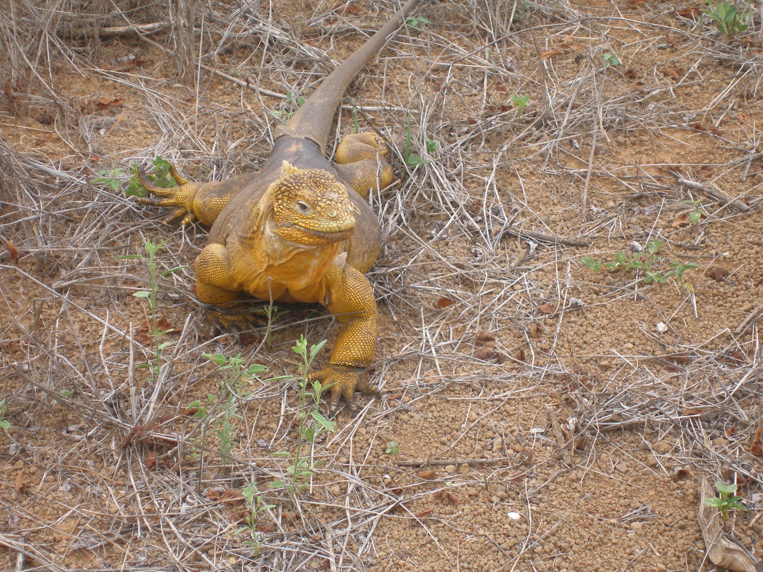 5 Luxury Wildlife Experiences worth every penny!